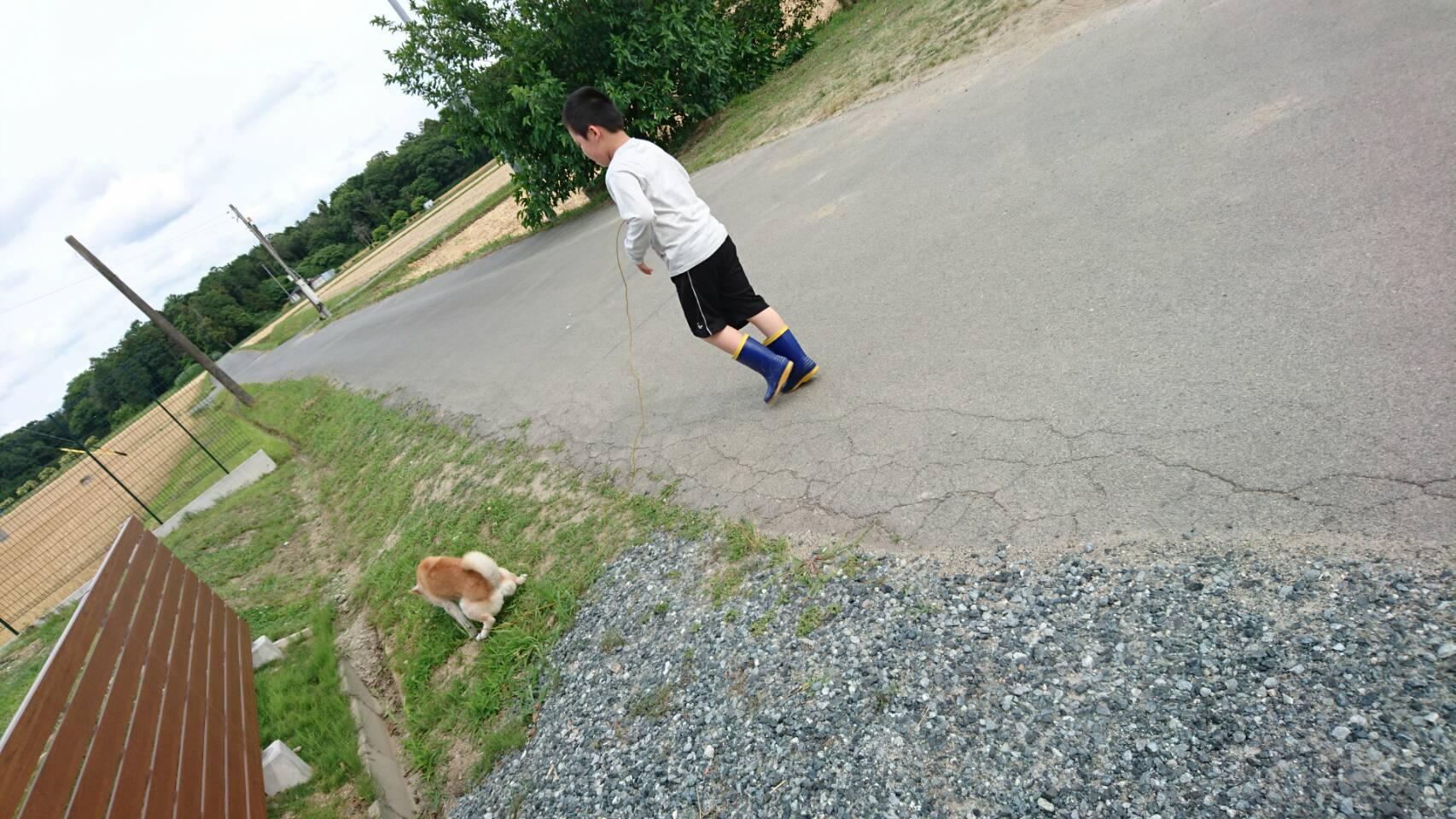 放課後等デイサービス:犬の散歩(動物セラピー)
